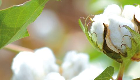 Le coton bio sous toutes ses formes !