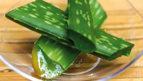 Le sirop et la poudre d'agave