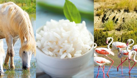 Rencontre avec un grain de riz de Camargue