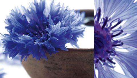 T'as de beaux yeux tu sais… grâce à l'eau florale de bleuet !