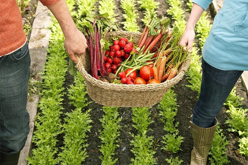 Les impacts positifs de l'agriculture bio