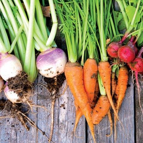 Régime alimentaire végétarien, flexitarien, vegan … quelles différences ?