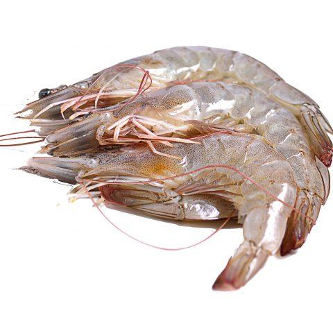 Crevettes de Madagascar crues bio