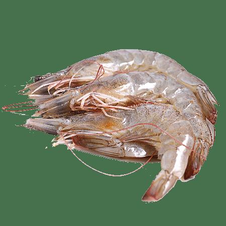 Crevettes de Madagascar crues bio 1