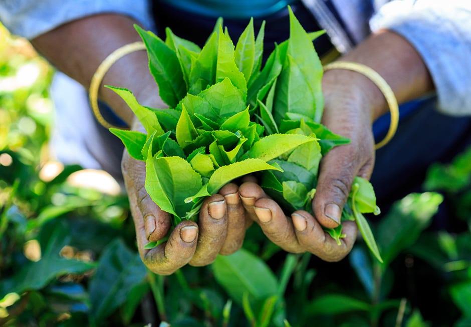Culture bio et permaculture 2