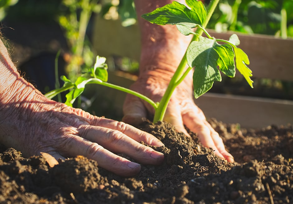 Culture bio et permaculture 3