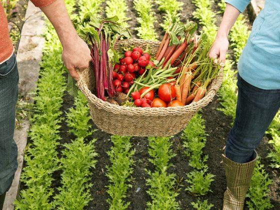 Rencontre : Les Incroyables Comestibles