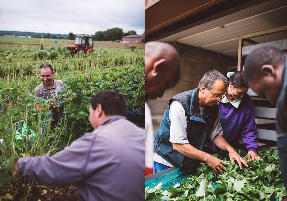 La vie en herbes ESAT 1