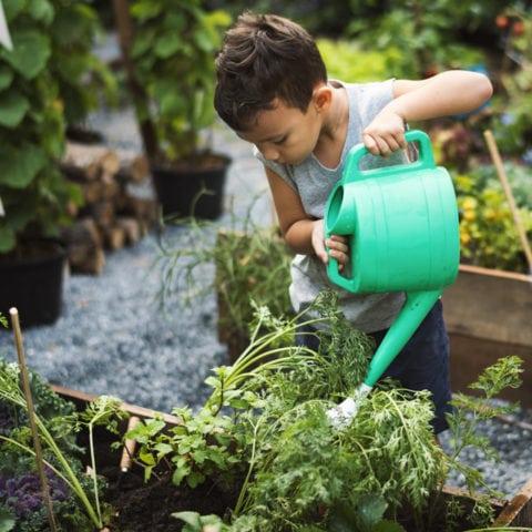 Nos petits amours de fruits et légumes 1
