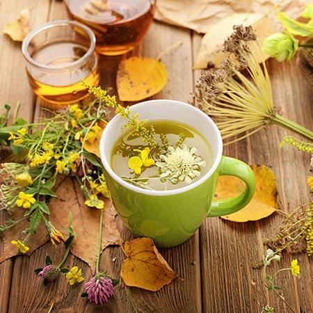 Conseils pour renforcer son organisme et ses défenses naturelles à l'automne
